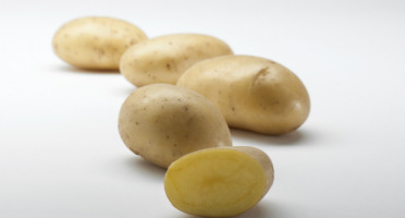 Maison Bayard - Pommes De Terre Gourmandine - 5kg