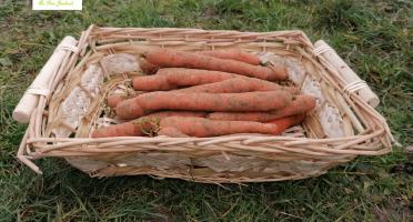 Au bon Jardinet - Carottes Un Goût Prononcé Et Délicieux 3kg