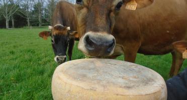 La Ferme de l'Abbaye - Fromage d'Abbaye : La Royale Du Berry En 10kg