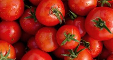 Maison Leroy - Tomates Rondes Pleine Terre - Colis 5kgs