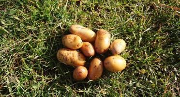 La Ferme Boréale - Pommes De Terre Belle De Fontenay Calibre Grenaille - 3kg