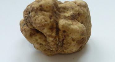 ALENA la Truffe d'Aquitaine - Truffe blanche (Truffe d'Alba) Tuber Magnatum Pico - 50g