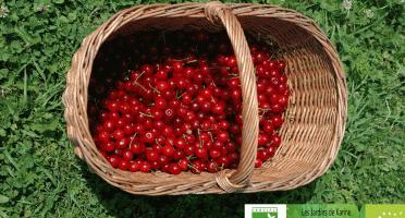 Les Jardins de Karine - Cerise griotte surgelée - 1 kg