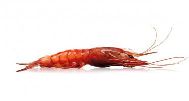 Qwehli - Queues De Gambero Rosso Crues - Boite De 1kg