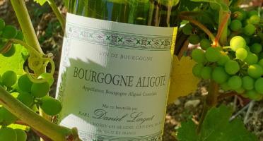 Domaine Daniel Largeot - AOC Bourgogne Aligoté - Lot de 6 Bouteilles