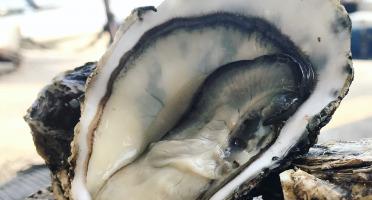 Vicente Coquillages - Huîtres De L'étang De Thau N°3 - 2kg