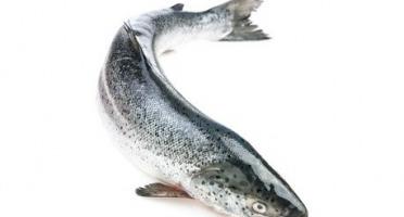 Ma poissonnière - Saumon Entier - Pièce De 3 Kg