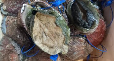 Les Viviers de Porsguen - Ormeaux - 1 kg