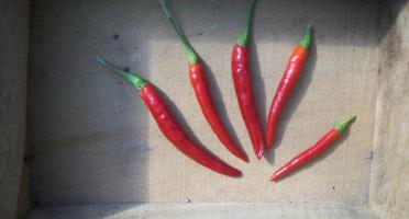 HERBA HUMANA - Piment frais de Cayenne