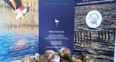 Camargue Coquillages - Bigorneaux Noisette De Camargue - Pêche Responsable