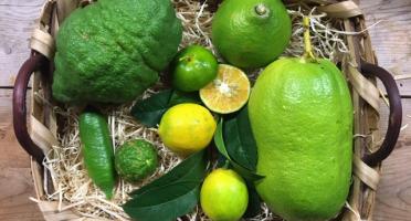 Le Jardin des Antipodes - Sélection Dégustation Agrumes Vertes