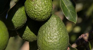Graines Précieuses - Houmous À L'avocat Et Zeste De Citron Vert Bio.