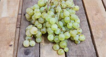 La Boite à Herbes - Raisin Blanc Danlas - 500g