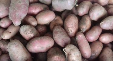 Multiproductions - Cédric Joliveau - Pomme De Terre Chérie 10kg