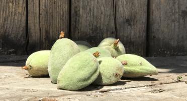 La Boite à Herbes - Amandes Douces bio - 100g