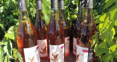 Domaine des Bourrats - Saint Pourçain AOC Rosé - 6 bouteilles