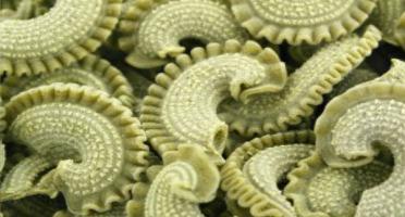 L'Atelier à Pâtes - Pâtes Crêtes de Coq Sèches à l'Ail des Ours Bio
