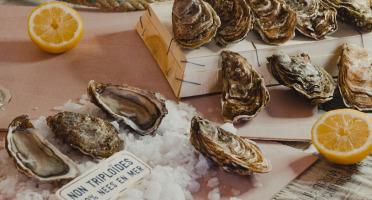 Thalassa Tradition - Huîtres Fines de Mer N°2 Bio Blainville Normandie - 12 pièces