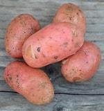 Le Châtaignier - Pomme de Terre Stemter - 6kg