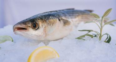 Côté Fish - Mon poisson direct pêcheurs - Muges 500g