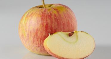 Les Côteaux Nantais - Pomme Rubine AB&Demeter -4kg