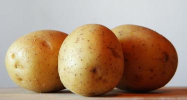 Le Châtaignier - Pommes De Terre Agatha - 2kg