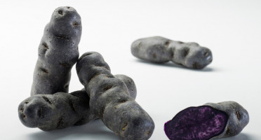 Maison Bayard - Pommes De Terre Vitelotte Bleue Du Santerre - 3kg