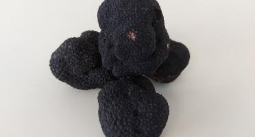 ALENA la Truffe d'Aquitaine - Truffe Noire Du Périgord Fraiche Tuber Melanosporum - 1ère Catégorie - 50g