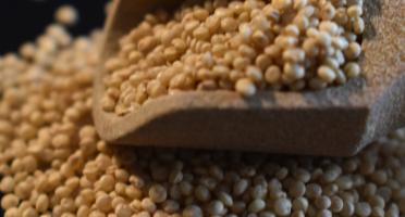 Païs'an Ville® - Farine Complète De Quinoa Français Bio 300g