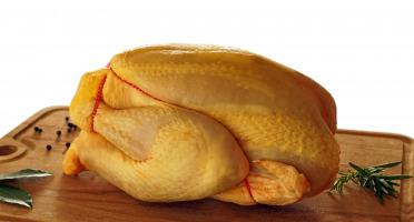 La ferme d'Enjacquet - Poulet Fermier Label Rouge Gers 1,7 kg x5