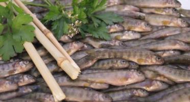 Ma poissonnière - Friture De Truite - Lot De 2 Kg