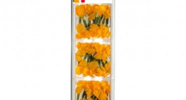 Maison Sales - Végétaux d'Art Culinaire - Concombre Fleur - 30 Pièces