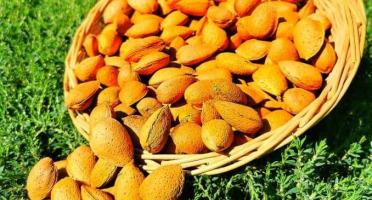 La Boite à Herbes - Amandes bio en coque - 500g