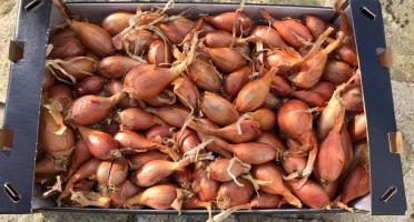 Maison Quéméner - Echalotes Traditionnelles - 5kg