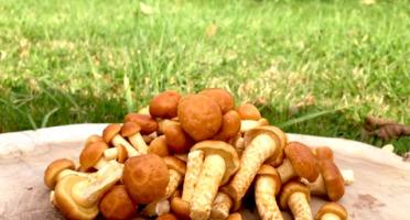 Les champignons du Loc'h - Namékos Bio - 250g