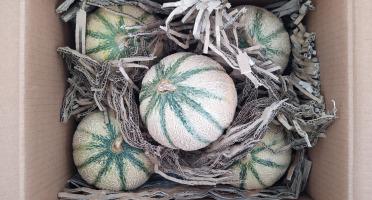 Domaine L'Hermiton - Melon BIO - 5 pièces