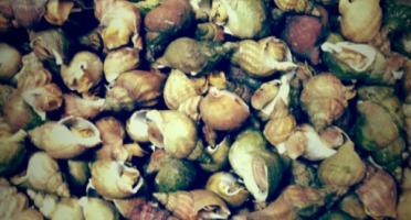 Thaëron - Bulots - Barquette de 1 kg