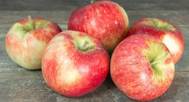 La Boite à Herbes - Pomme Reine De Reinette - 1kg