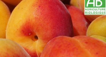 Mon Petit Producteur - Abricot bio [vendu par 3kg]