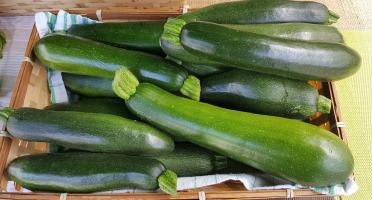 Les Jardins de Champlecy - Courgettes Vertes 5Kg