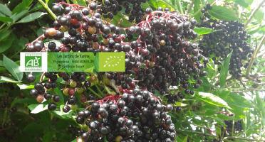 Les Jardins de Karine - Sureau surgelé - 1 kg