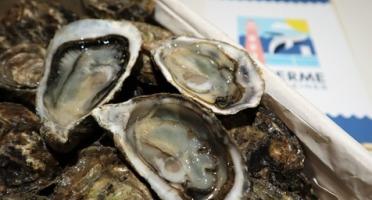 LA FERME DES BALEINES - Bourriche De 60 Huîtres Spéciales N°3 - 100 % Élevées En Claires