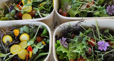 Les Jardins du Mas de Greil - Saladettes des Jardins