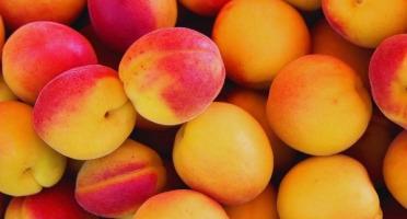 La Ferme de l'Ayguemarse - Abricots à Confiture Petit calibre