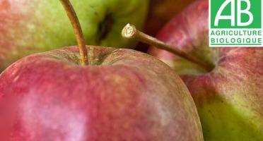 Mon Petit Producteur - Pomme Bio Arlet - 1kg