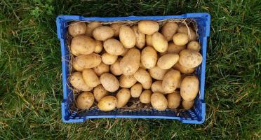 La Ferme Boréale - Pommes De Terre Agata Calibre 35-55 - 5kg