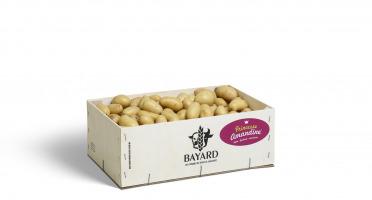 Maison Bayard - Pommes De Terre Mini Princesse Amandine - 3kg