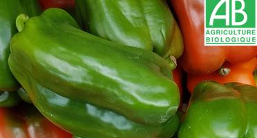Mon Petit Producteur - Mélange Poivrons Bio vert et rouge