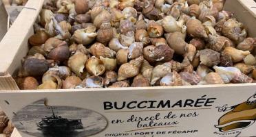 Buccimarée - Bulot Vivant Frais - 2kg