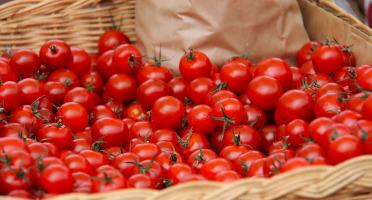 Le Châtaignier - Tomates  cerise - 500g